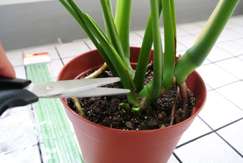 植物を剪定する