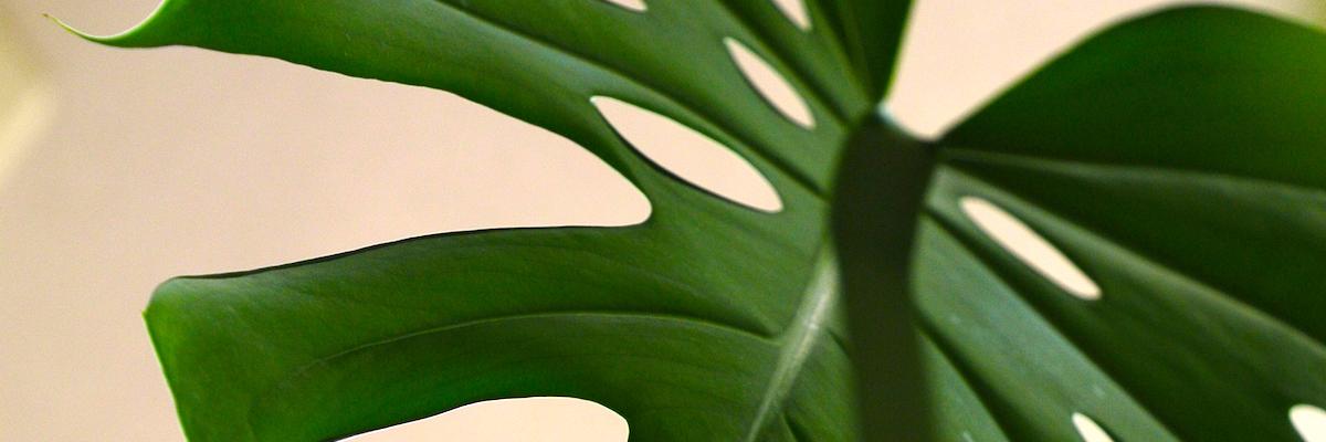 観葉植物とは