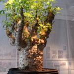 念願の『ウルトラ植物博覧会2016』- 西畠清順と愉快な植物たち – を観にPOLA MUSEUM ANNEXへ足を運んでみた!